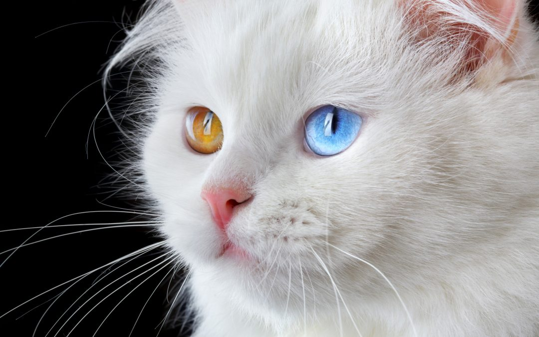 The Science Behind Cats and Essential Oils